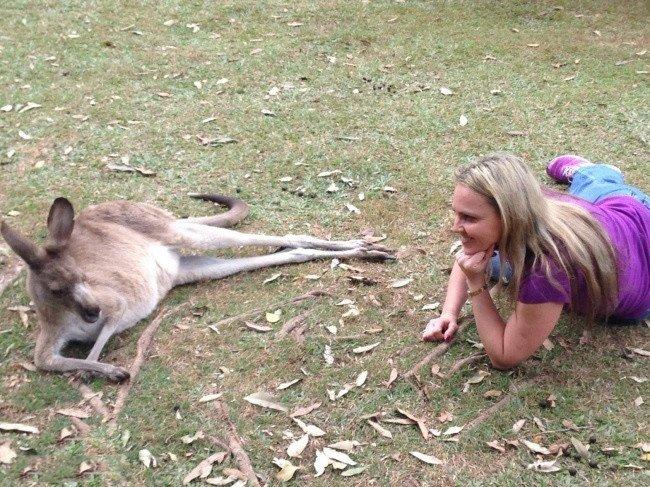 kanguruu