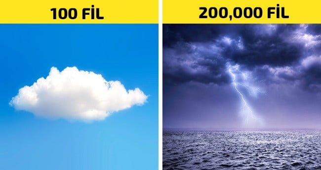 bulutların fillere göre ağırlığı