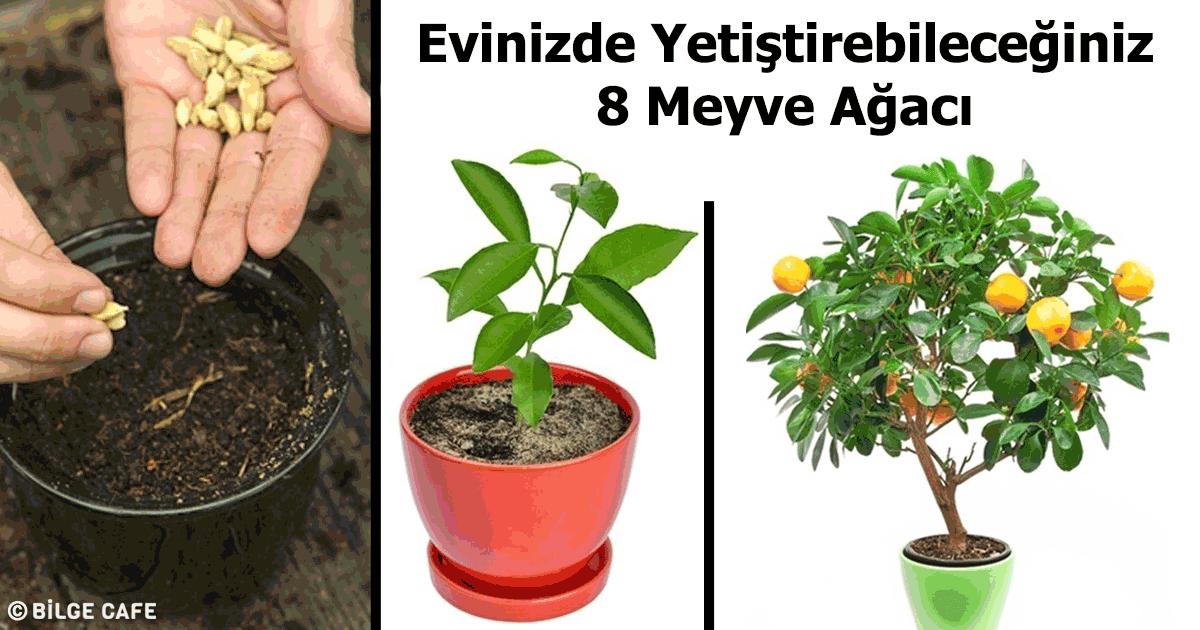 evde meyve ağacı nasıl yetiştirlir