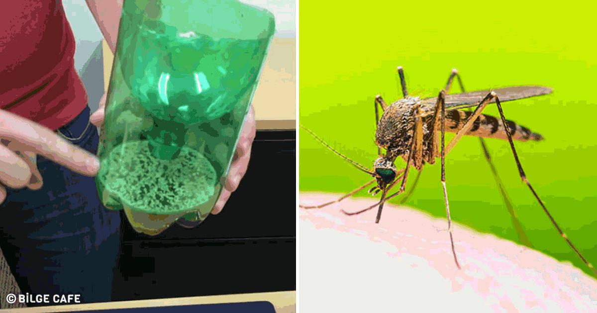sivrisineğe son