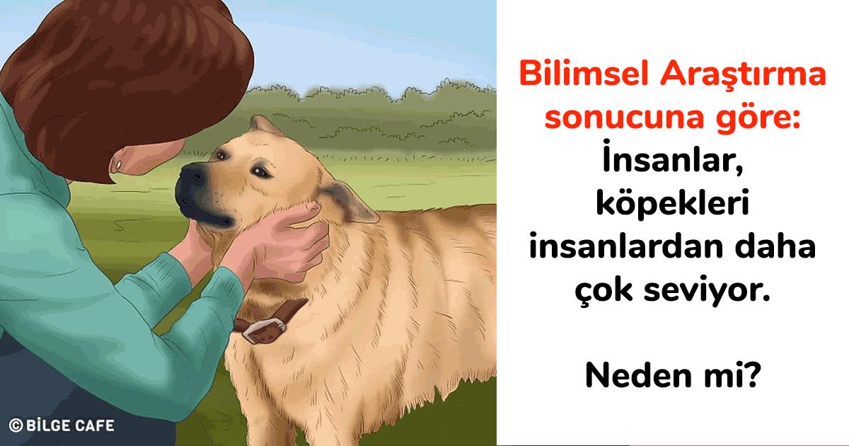 köpekler ve insanlar