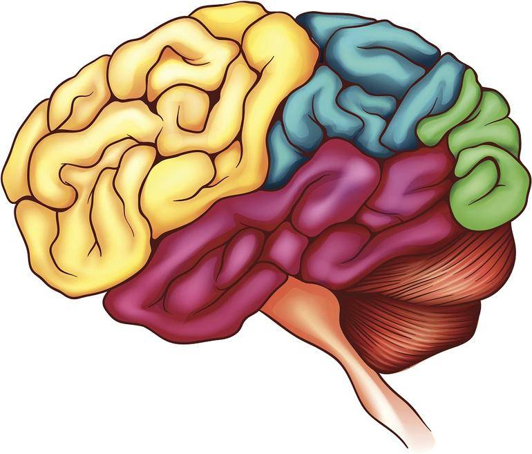 beyin 2