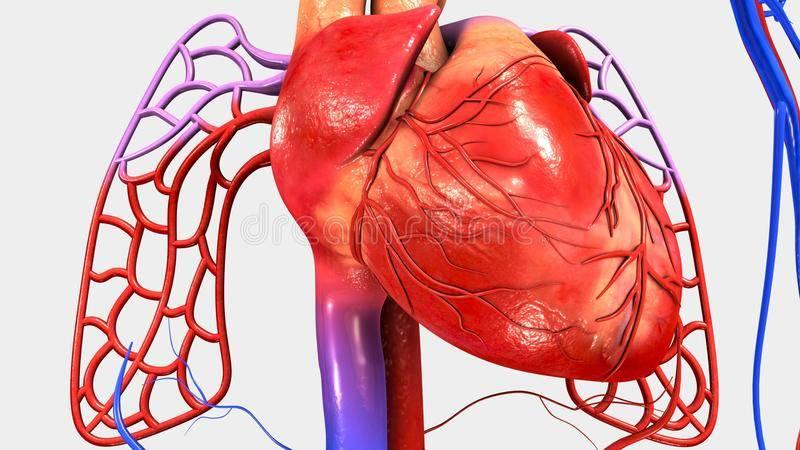 kalp ve dolaşım sistemi