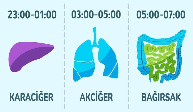organların temizlenebilme saatleri