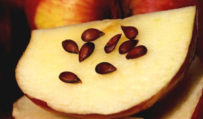 elma çekirdeği