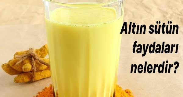 altın sütün faydaları nelerdir