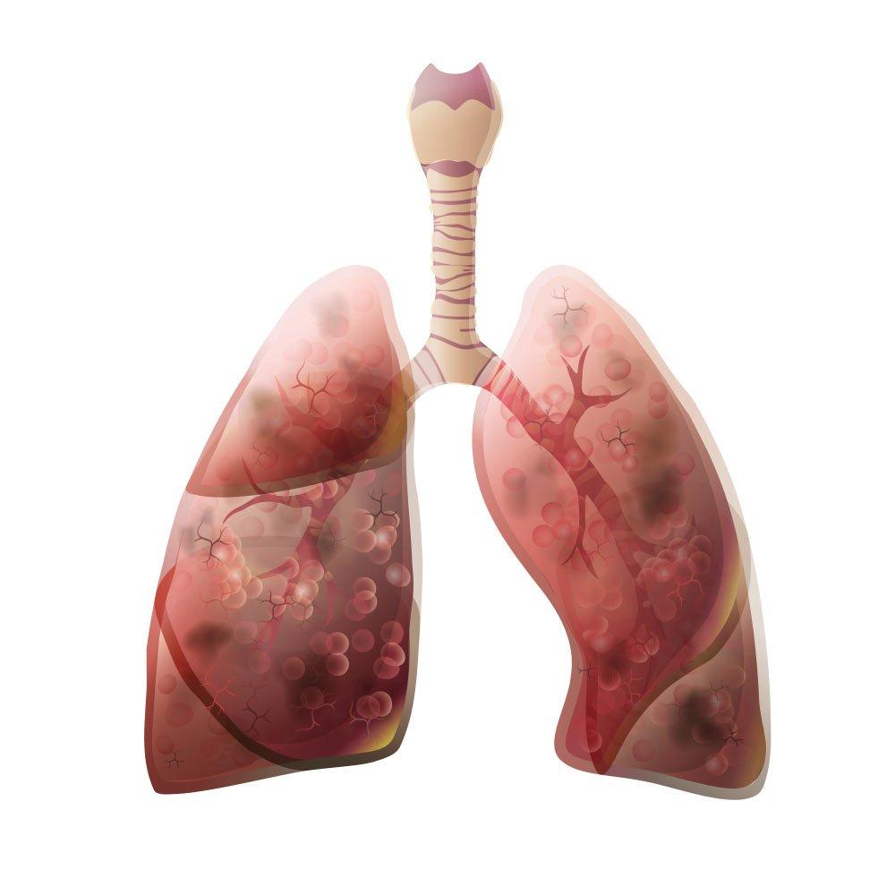 saglikli organlar
